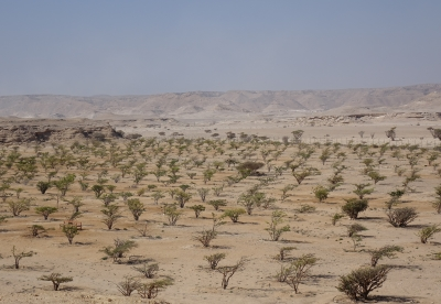 Land of Frankincense