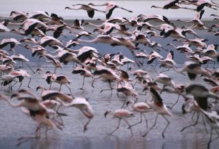 Kenya Lake System