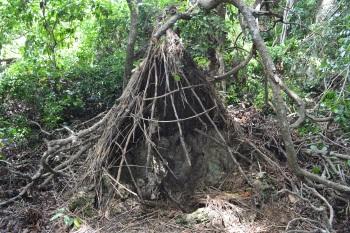 Mijikenda Kaya Forests