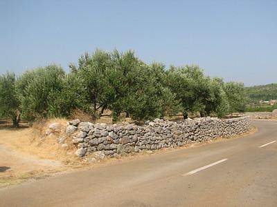 Stari Grad Plain