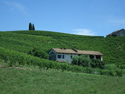 Vineyard Landscape of Piedmont