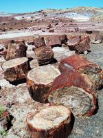 Petrified Forest National Park (T) by Kyle Magnuson