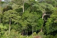 Dja Faunal Reserve by Peter Howard
