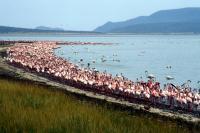 Kenya Lake System by Solivagant