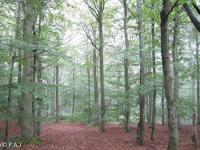 Primeval Beech Forests by Peter Alleblas