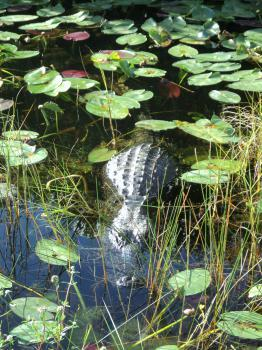 Everglades by Kyle Magnuson