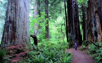 Redwood by Kyle Magnuson
