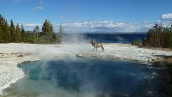 Yellowstone by Ian Cade