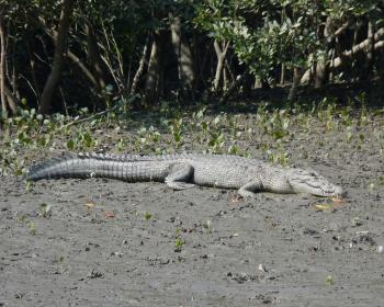 Sundarbans National Park by Solivagant