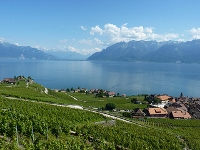 Lavaux, Vineyard Terraces by Clyde