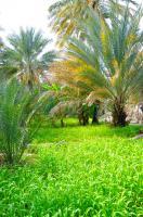 Aflaj irrigation system by Frederik Dawson