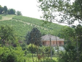 Vineyard Landscape of Piedmont by John Booth