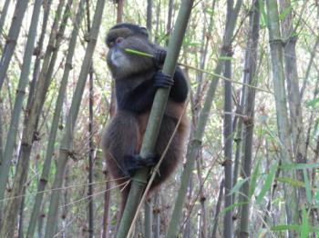 Mgahinga Gorilla National Park (MGNP) (T) by Els Slots