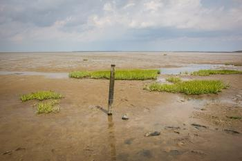Wadden Sea by Michael Turtle