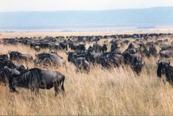 The African Great Rift Valley - The Maasai Mara (T) by Michael Novins
