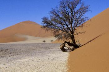 Namib Sand Sea by Walter