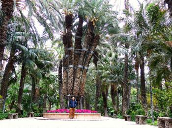 Palmeral of Elche by Clyde
