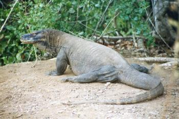 Komodo National Park by Michael Novins