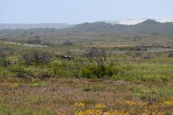 Cape Floral Region by bernard Joseph Esposo Guerrero