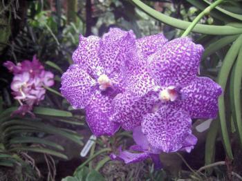 Singapore Botanic Gardens  by Jay T