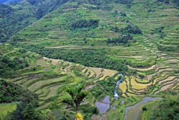 Rice Terraces of the Philippine Cordilleras by Gary Arndt