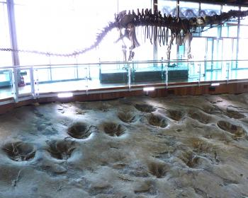 Sites of fossilized dinosaurs throughout the Southern seacoast (T) by Solivagant