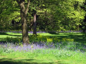 Kew Gardens by Jay T