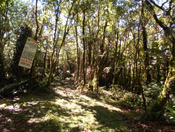 Mt. Malindang Range Natural Park (T) by Boj