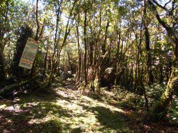 Mt. Malindang Range Natural Park (T) by Boj