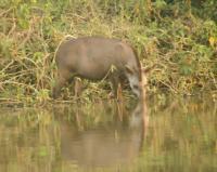 Pantanal by Solivagant