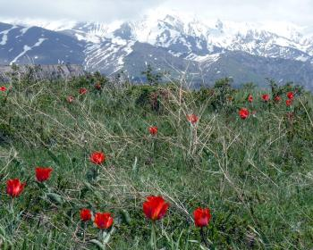 Western Tien-Shan by Solivagant