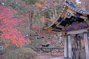 Nikko by Gary Arndt