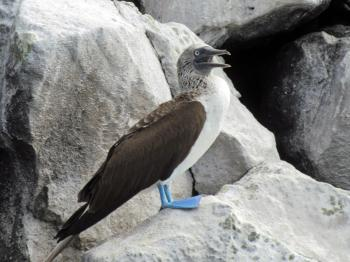 Galapagos Islands by Jay T