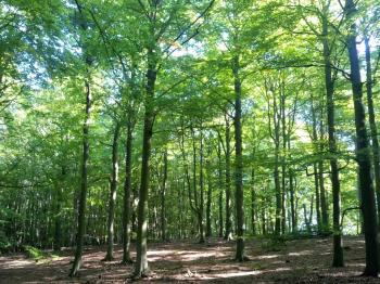 Primeval Beech Forests by Tsunami