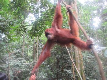 Tropical Rainforest Sumatra by Wojciech Fedoruk