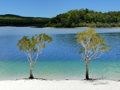 Fraser Island by Clyde