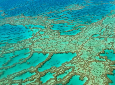Great Barrier Reef by Clyde