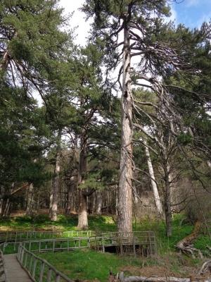 Parco Nazionale della Sila - Sila, gran bosco d'Italia  (T) by Argo