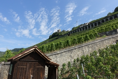 Lavaux, Vineyard Terraces by Nan