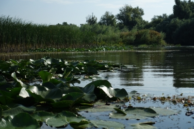 Danube Delta by Nan