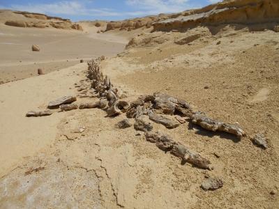 Wadi Al-Hitan by Michael anak Kenyalang