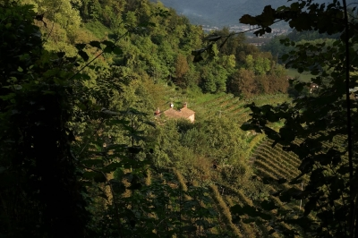 The Prosecco Hills of Conegliano and Valdobbiadene (T) by Nan