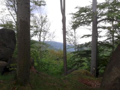 Primeval Beech Forests by Matejicek