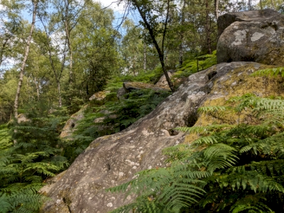 Le massif forestier de Fontainebleau (T) by GrendelGongan