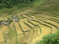 Rice Terraces of the Philippine Cordilleras by Ivan ManDy