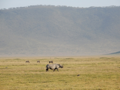 Ngorongoro by Squiffy