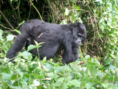 Bwindi Impenetrable National Park by Squiffy