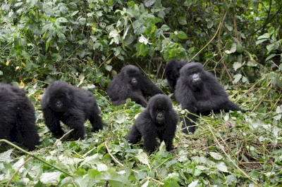 Virunga National Park by Michael Novins
