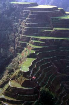 Rice Terraces of the Philippine Cordilleras by Solivagant