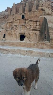 Petra by GabLabCebu